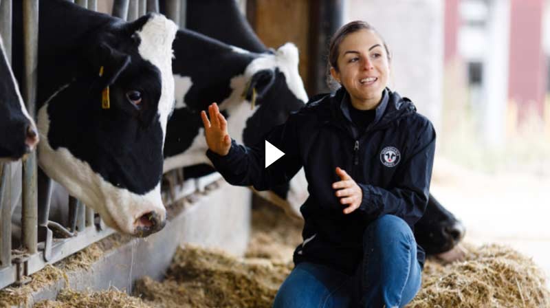Virtual Dairy Field Trip